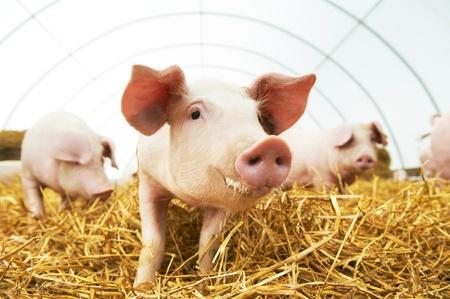 Protección para granjas